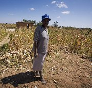 zimbabwe-maize-IRIN photos.jpg